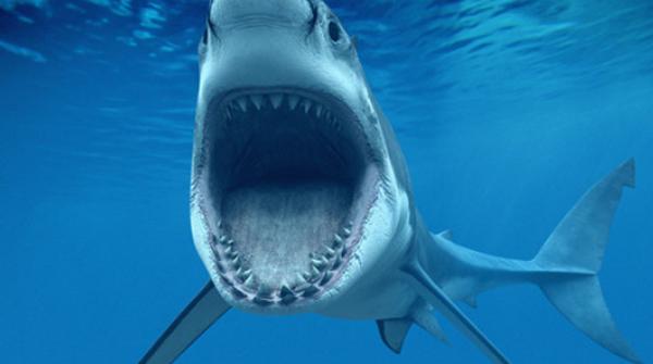【蜗牛扑克】德州扑克7大特征告诉你紧凶玩家也能是鱼